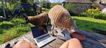 """Cilla and David """"helping"""" me work from home"""