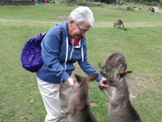 at Tasmania wildlife park April 17