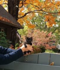 Harry as a kitten.