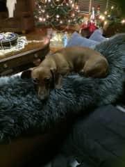 Hudson  (dog-sitting for a friend)