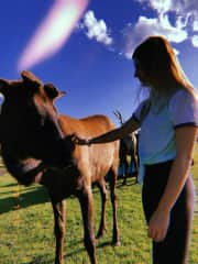 Feeding young bulls on an elk farm!