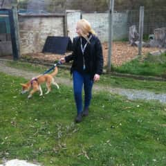 I loved working at the Wildlife Sanctuary. This is me walking a dingo!