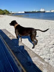 At the Dog Beach