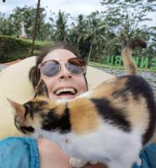 A friendly Bali cat