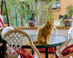 Rusty, my cat, thinking there should be food on the table!