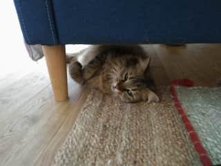 Under the sofa.