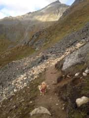 A trail dawg! Up in Alaska.
