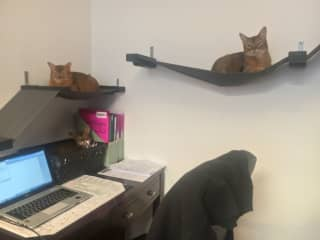 Office cats