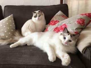 Mimi & Rodolfo on the sofa