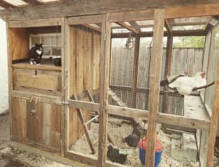 Chicken coop, complete with our friendly feral kitty.