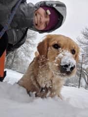Jax the Golden Boy in snowy Denver, CO