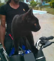 Black Panther ready to ride with Big Daddy!