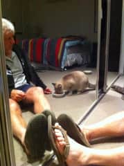 Bill with a very anxious rescue cat