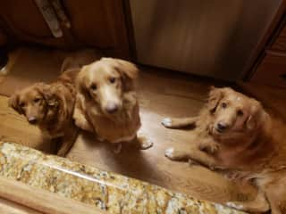 Three Good Doggies: Swede, Leo and Poppy. Waiting for their Dinner!