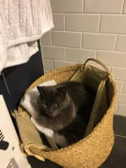 mouse in the towel basket