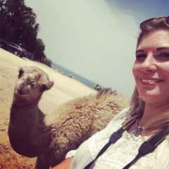 Even camels like me.   :)