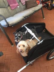 Coming for a bike ride with us in their carrier