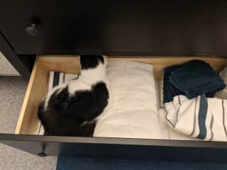 Bean's hiding place. She thinks the bathroom drawer is just for her. Don't worry, we have clean towels.