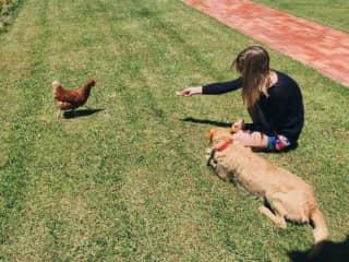 Anna, Bambu and chicken