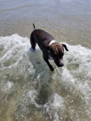 Joy likes the beach and is good with the other dogs.