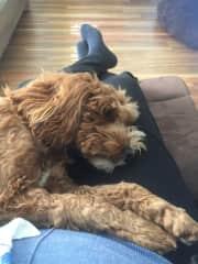 Jaina loves a lap cuddle