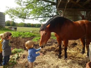Aiden feeding Bitsy the horse