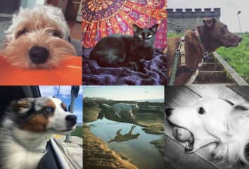 Some of my pet photography of pets I have looked after in the past
