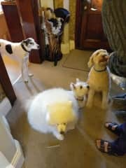 Our friends are dog lovers - a usual gathering!