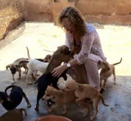 Doing voluntary work in the animal shelter in Kampala, Uganda