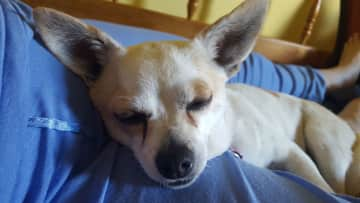 Luna taking a nap on Jeanne's lap