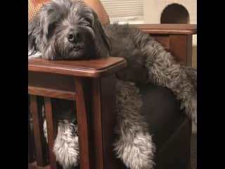 Hank's favorite sport: napping