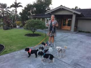 Trusted Housesitters on Oahu
