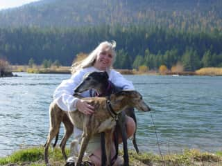 Greyhounds Buddy and Cissie