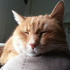 This is Archie. He passed away in 2019 from cancer.