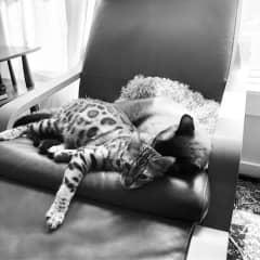 Moby & Torus