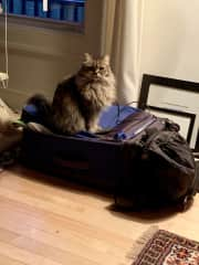 Creton liked my suitcase immediately, in Montreal