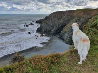 Daring Loki checking out the secret beach from above.