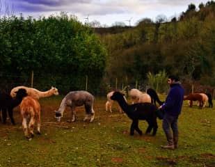 Ike with some of the 39 alpacas we cared for.