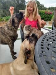 Ana, Elsa and Snowball competing for attention in DeLuz, Temecula, California, USA