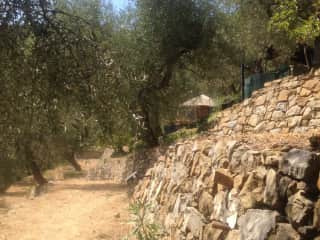 Terraces and olive trees with photo of one of the yurts in distance