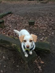 Lucy loves the woods!