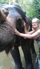 Carole washing rescued elephants in Perriyar, India.