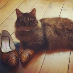 My sister's cat Mouse. She's obsessed with my shoes!
