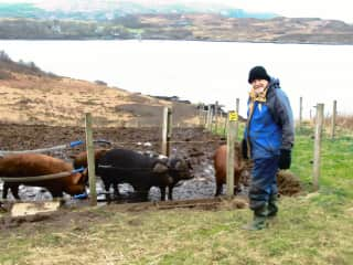 Winter house sit on the Isle of Skye with chickens, ducks, cats and pigs