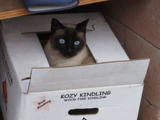 Squeeky in a box