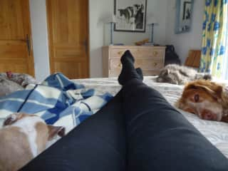 sharing an afternoon siesta with 3 dogs and a cat in France