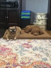 Winston and Coco