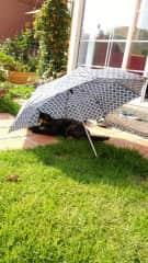 Summer day in back garden