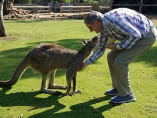 Even kangaroos like to have their tummy scratched