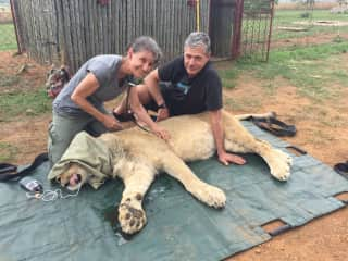 The African Veterinary Education course